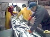 Рыбоперерабатывающий завод Аляска