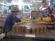 Работа на рыбных заводах
